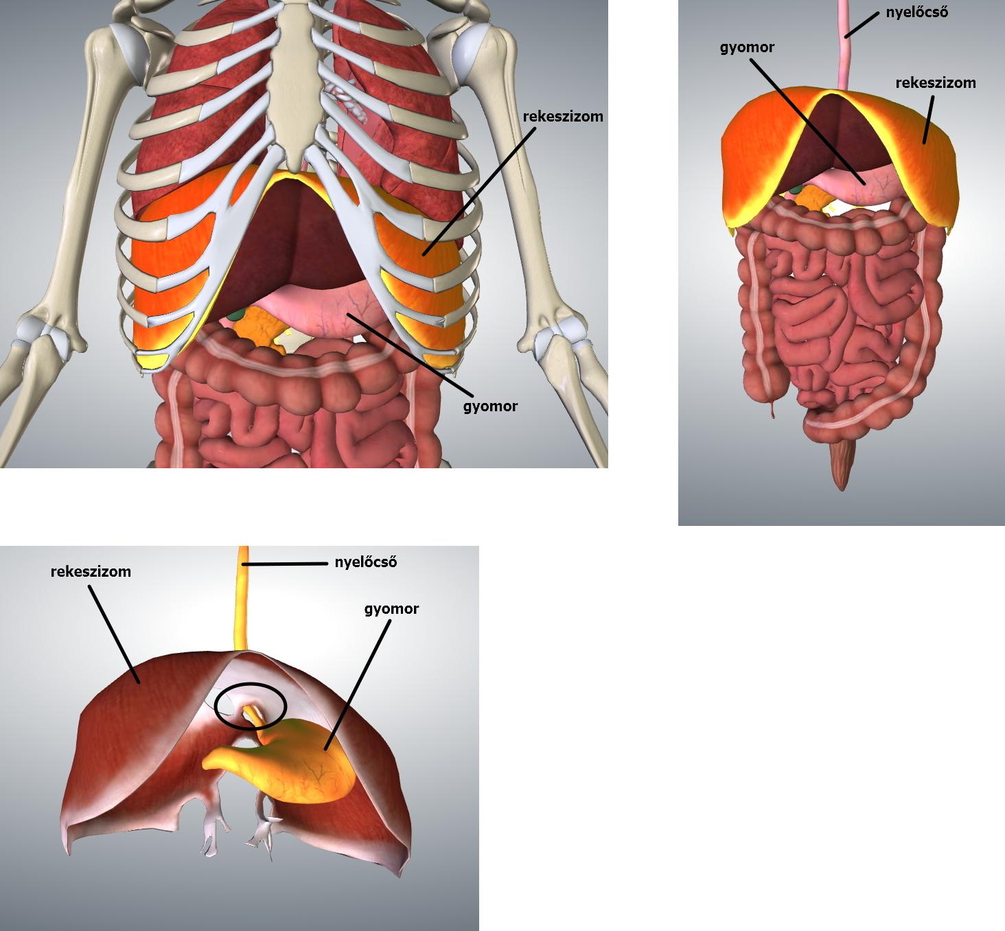 diaphragm_felirattal_osszes